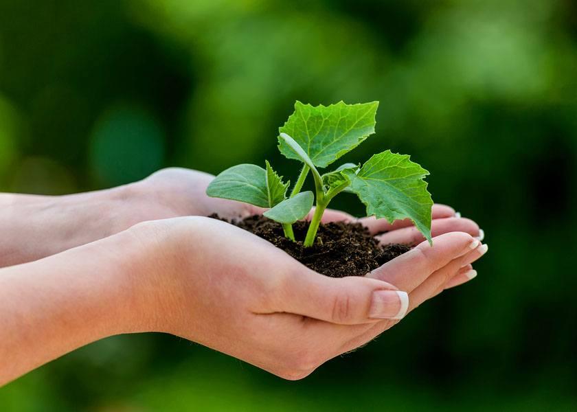 4 Straightforward Reasons </a>You Should Eat Organic Food