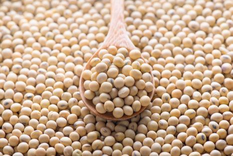 Spill The Beans: Is Soy Good For You Or Not?