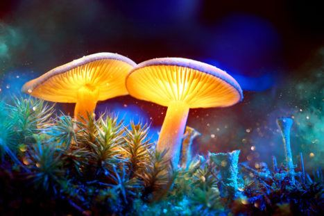12 Things I Learned About Life From Eating A 'Magical' Fungus