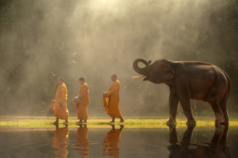 Understanding The Law Of Cause And Effect: Karma In Buddhism