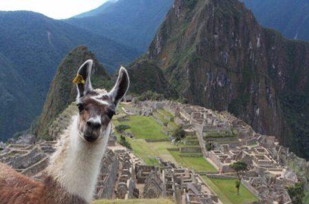 Vegan + Yoga + Adventure In Machu Picchu