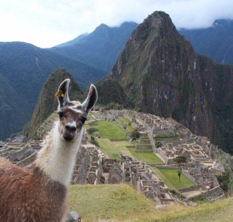 Vegan + Yoga + Adventure In Machu Picchu
