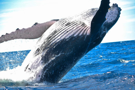 The Yoga I Learned From Whales, Part 3: The Gift Of Harmony