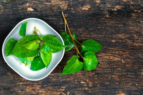 15 Proven Health Benefits Of Houttuynia Cordata Herb