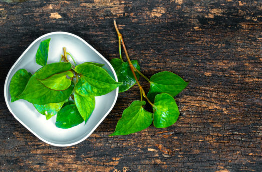 15 Proven Health Benefits Of Houttuynia Cordata Herb