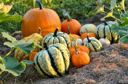 Pumpkin And Winter Squash: Health Benefits And A Spicy Pumpkin Potato Soup Recipe