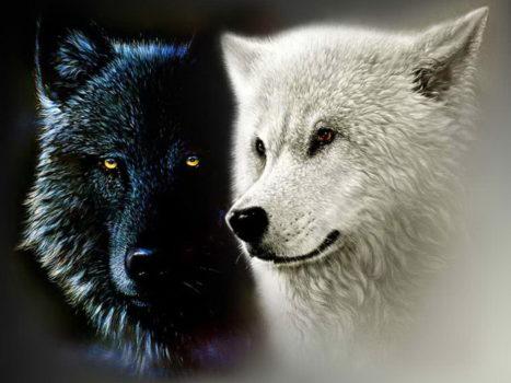 Wolf-Magic-Begin Now