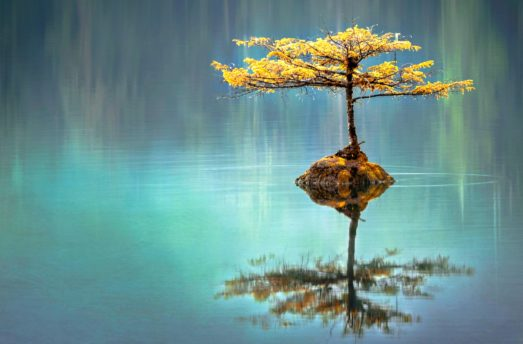 5 Steps To Deeper Wisdom