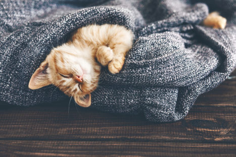 10 Secret Rituals To Meditate Like A Cat