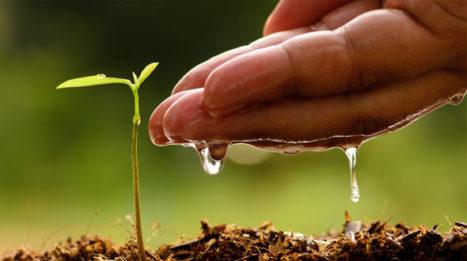 Lemon Trees And Soil