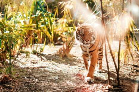 Yoga And Trauma Healing: The Surprising Thing Wild Animals Can Teach Us