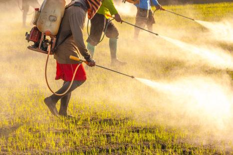 Why Food Sources Matter: Pesticides & Public Health
