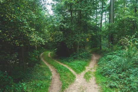 On Owning Your Path As A Healer